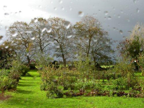 http://reptilyfamily.free.fr/images/jardin/jardin2009/promenade_novembre/DSCN5474.JPG
